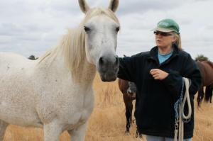 sandy_horse